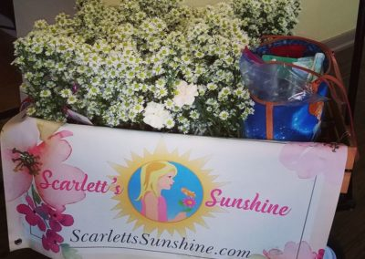 scarletts-sunshine-cart